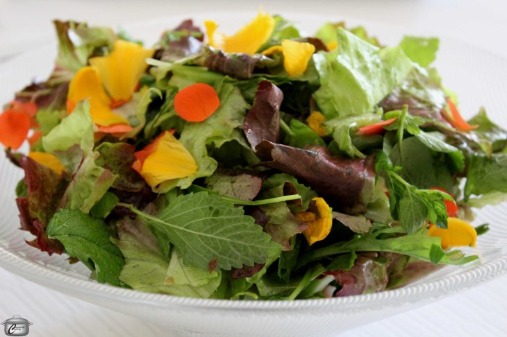 Leaf and flower salad with wild rose vinaigrette
