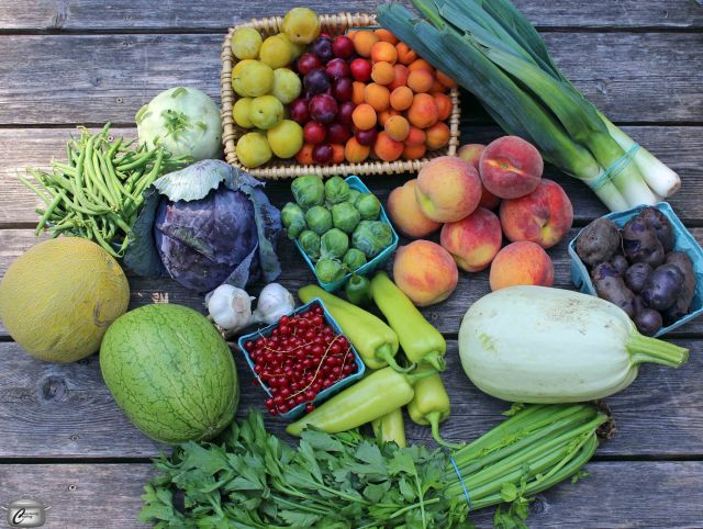 Every item in the basket is perfectly fresh and ripe; the selection includes local vegetables and melons as well as tender stone fruit from Niagara.