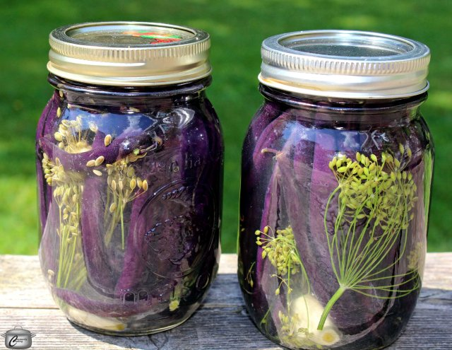 You can use beans of any colour to make a small batch of these tasty pickles.