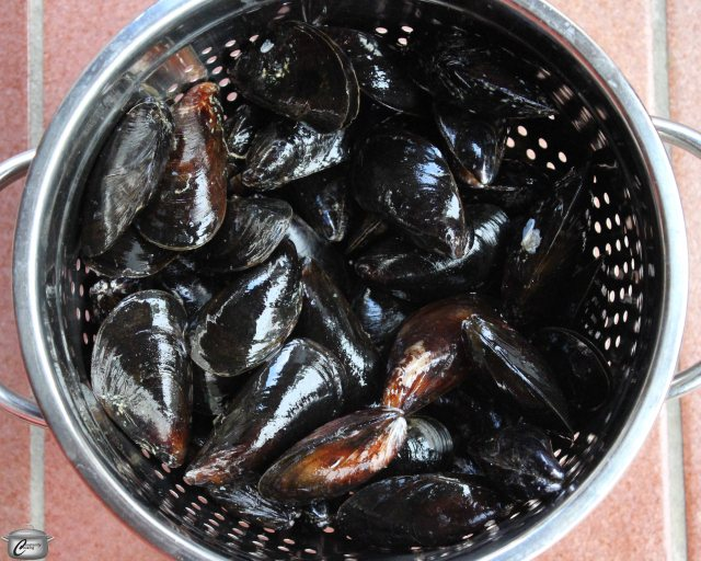 Quality fresh mussels will have few or no broken shells and if open, the shells will close up when handled.