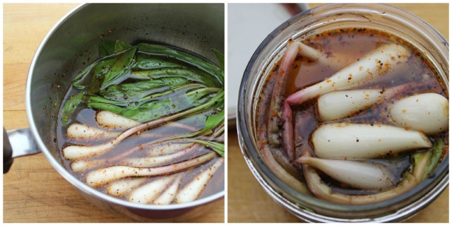 This is a nice alternative to pickling ramps in a simple vinegar-salt-sugar-water brine. If you want to fit more ramps in the jar, cut the leaves off before pickling.