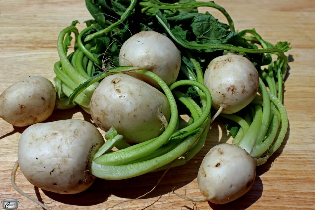 Hakurei turnips don't have the characteristic purple-pink hue that regular white turnips do. Their leaves are really delicious and the entire plant is extremely nutritious.